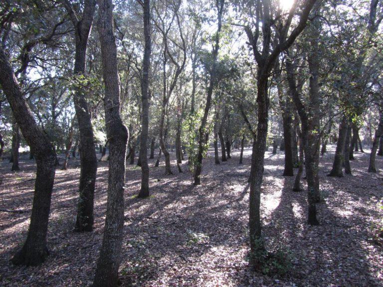 bosque-encinas-binissati (2)